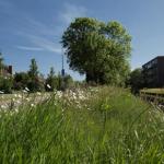 Middelburgse Milieuvisie